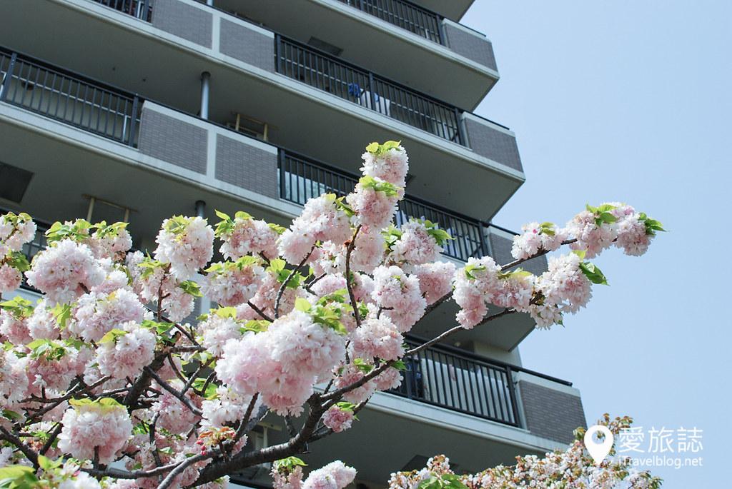 大阪造币局 樱花 49