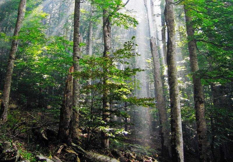 Foto gratis de un bosque verde y frondoso