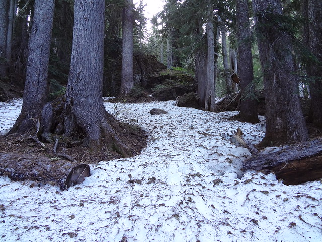 Glady's Divide Trail