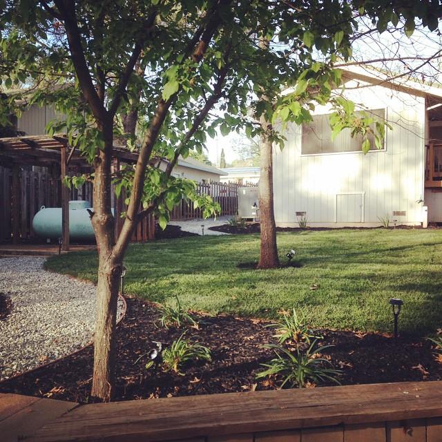 Ahhhh the backyard looks so good!