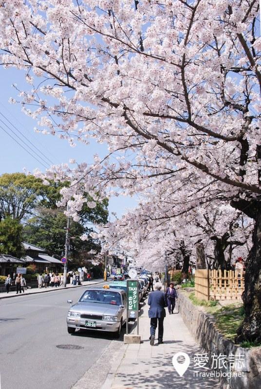 京都赏樱景点 哲学之道 38