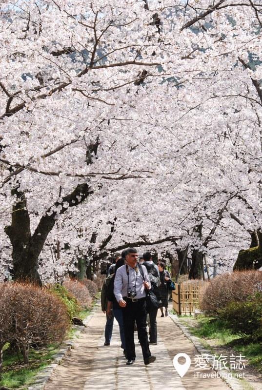 京都赏樱景点 哲学之道 19