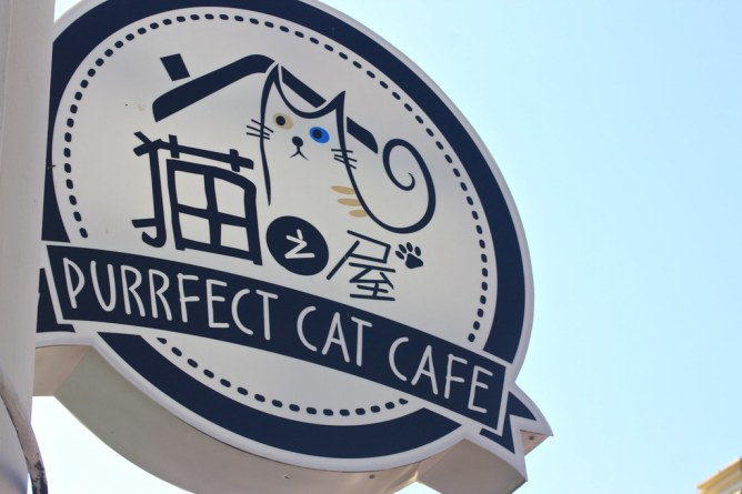 Purrfect cat cafe