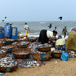 01 Viajefilos en Sri Lanka. Negombo 20