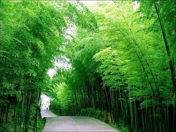 hutan bambu Bangli