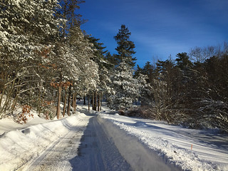Pine Banks in Winter