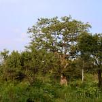 06 Viajefilos en Sri Lanka. Minneriya 16
