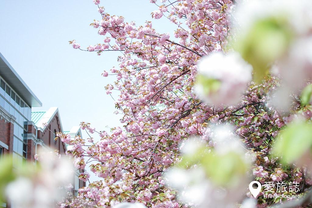 大阪造币局 樱花 54