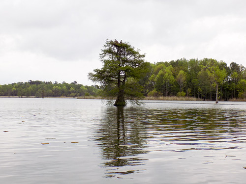 Lake Marion Plantation Islands-024