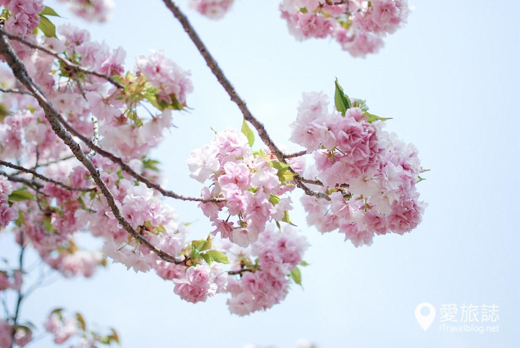 大阪造币局 樱花 39