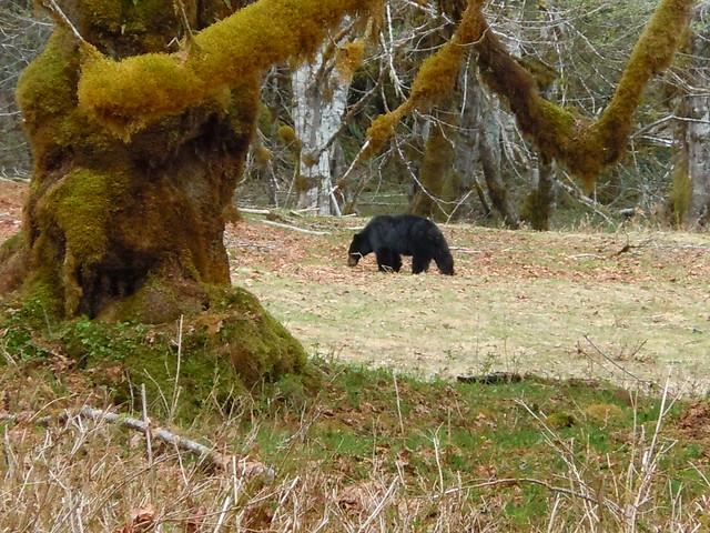 Bear #4