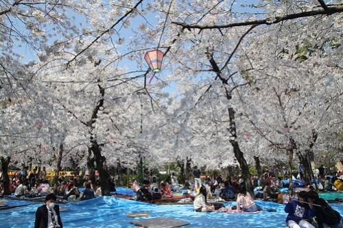 20150330-鶴舞公園