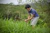 Waiahole Farm Weeding