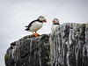Two more puffins