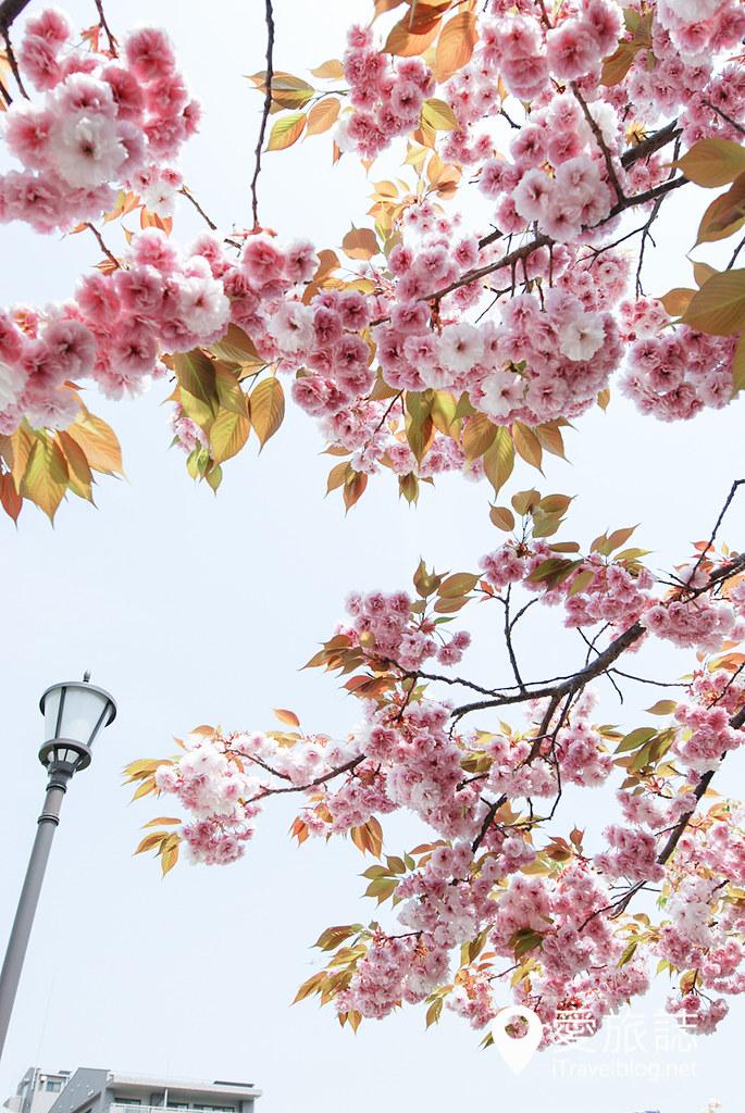 大阪造币局 樱花 16