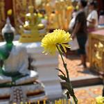 01 Viajefilos en Chiang Mai, Tailandia 172