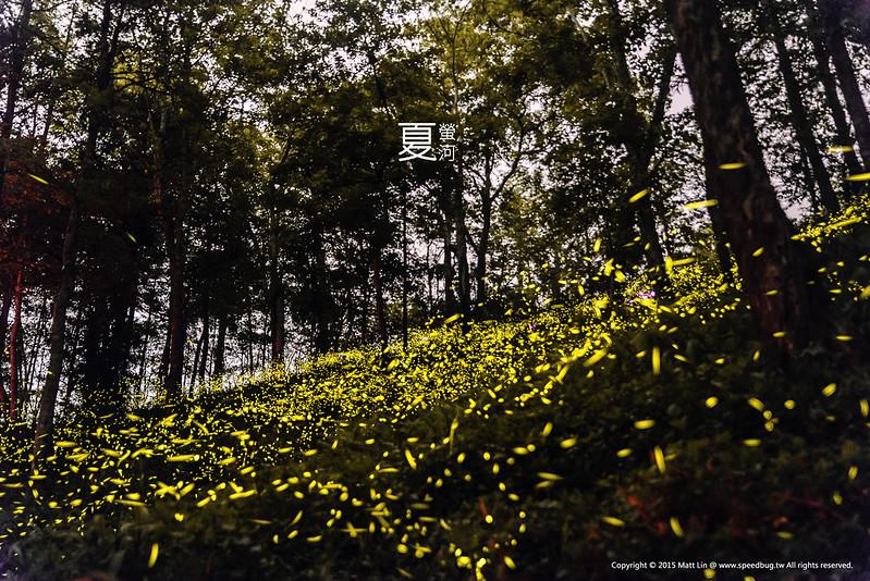夏螢河 Summer Nights & Fireflies