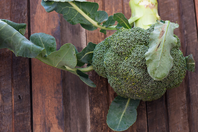 Super Tender Broccoli