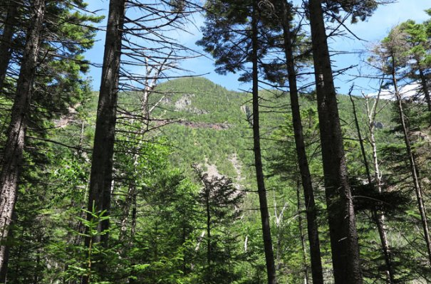 Carrigain Notch Mt. Lowell