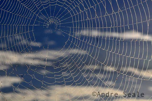 Web and cloud