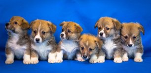 Productos veterinarios alicante, animales de compañía
