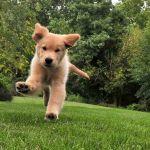 La rabia en mascotas ¿Qué es y cómo se previene?