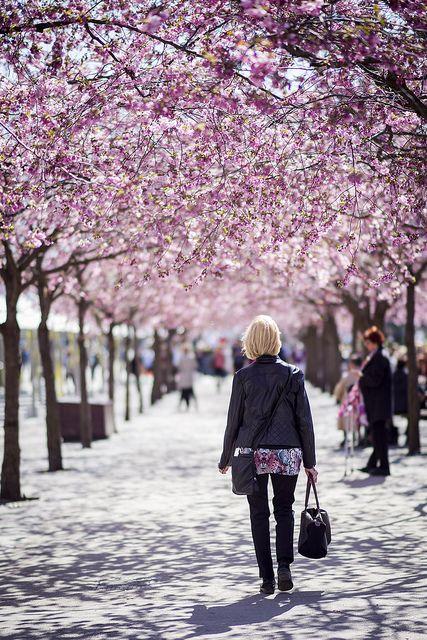 menopausia-causas-y-tratamientos