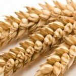 Analisi capillare per la sensibilità al glutine