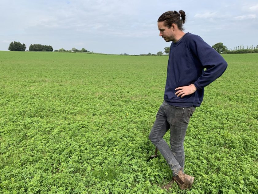 Fred Price in a field of alfalfa, returning nitrogen to the soil as part of his rotation