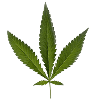 Marijuana Leaf-ruderalis