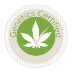 marijuana seeds for sale Genetics Certified
