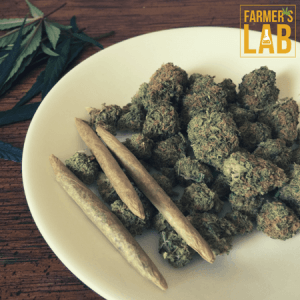 Cannabis Seeds Shipped Directly to Your Door in Alma, QC. Farmers Lab Seeds is your #1 supplier to growing Cannabis in Alma, Quebec.