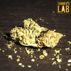 Cannabis Seeds Shipped Directly to Your Door in Chateauguay, QC. Farmers Lab Seeds is your #1 supplier to growing Cannabis in Chateauguay, Quebec.
