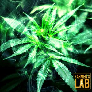 Cannabis Seeds Shipped Directly to Your Door in Crystal City, TX. Farmers Lab Seeds is your #1 supplier to growing Cannabis in Crystal City, Texas.