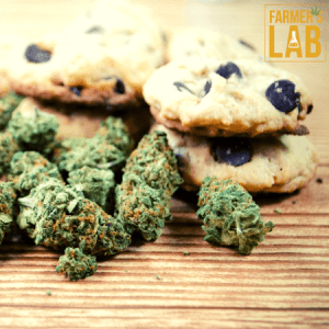Cannabis Seeds Shipped Directly to Your Door in Fox Lake, IL. Farmers Lab Seeds is your #1 supplier to growing Cannabis in Fox Lake, Illinois.