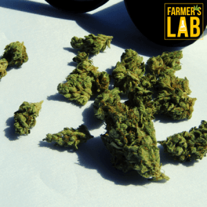 Cannabis Seeds Shipped Directly to Your Door in Grain Valley, MO. Farmers Lab Seeds is your #1 supplier to growing Cannabis in Grain Valley, Missouri.