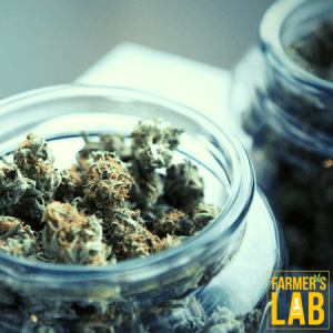 Cannabis Seeds Shipped Directly to Your Door in Gulf Breeze, FL. Farmers Lab Seeds is your #1 supplier to growing Cannabis in Gulf Breeze, Florida.