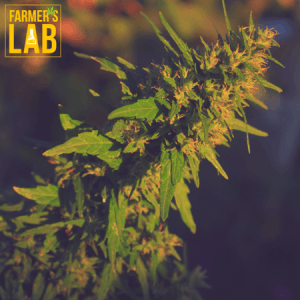 Cannabis Seeds Shipped Directly to Your Door in Harriman, TN. Farmers Lab Seeds is your #1 supplier to growing Cannabis in Harriman, Tennessee.