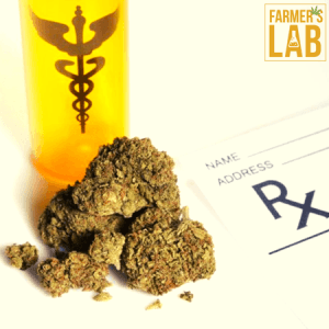 Cannabis Seeds Shipped Directly to Your Door in Kennedale, TX. Farmers Lab Seeds is your #1 supplier to growing Cannabis in Kennedale, Texas.