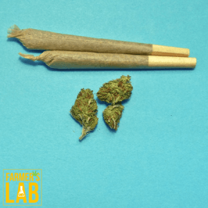 Cannabis Seeds Shipped Directly to Your Door. Farmers Lab Seeds is your #1 supplier to growing Cannabis in Manitoba.