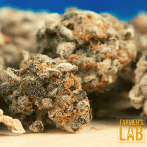 Cannabis Seeds Shipped Directly to Your Door in North Greenbush, NY. Farmers Lab Seeds is your #1 supplier to growing Cannabis in North Greenbush, New York.