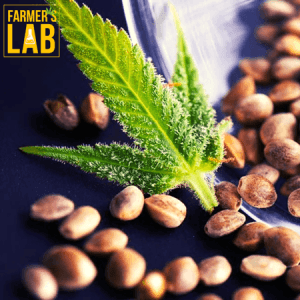 Cannabis Seeds Shipped Directly to Your Door in Oak Ridge, TN. Farmers Lab Seeds is your #1 supplier to growing Cannabis in Oak Ridge, Tennessee.