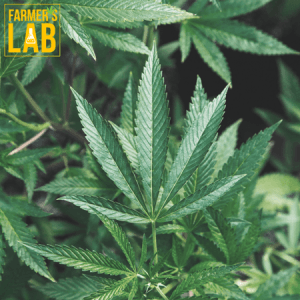Cannabis Seeds Shipped Directly to Your Door in Powell River, BC. Farmers Lab Seeds is your #1 supplier to growing Cannabis in Powell River, British Columbia.