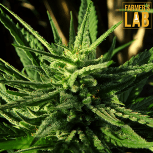 Cannabis Seeds Shipped Directly to Your Door in Prince George, BC. Farmers Lab Seeds is your #1 supplier to growing Cannabis in Prince George, British Columbia.