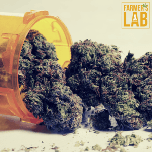 Cannabis Seeds Shipped Directly to Your Door in Princeton Meadows, NJ. Farmers Lab Seeds is your #1 supplier to growing Cannabis in Princeton Meadows, New Jersey.