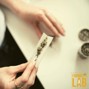 Cannabis Seeds Shipped Directly to Your Door in Red Bank, NJ. Farmers Lab Seeds is your #1 supplier to growing Cannabis in Red Bank, New Jersey.