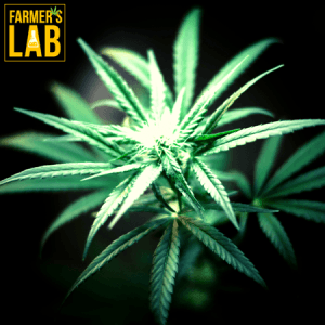 Cannabis Seeds Shipped Directly to Your Door in Rice Lake, WI. Farmers Lab Seeds is your #1 supplier to growing Cannabis in Rice Lake, Wisconsin.