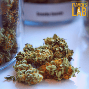 Cannabis Seeds Shipped Directly to Your Door in Saint-Pascal, QC. Farmers Lab Seeds is your #1 supplier to growing Cannabis in Saint-Pascal, Quebec.