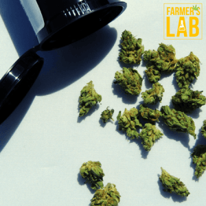 Cannabis Seeds Shipped Directly to Your Door in Saskatoon, SK. Farmers Lab Seeds is your #1 supplier to growing Cannabis in Saskatoon, Saskatchewan.