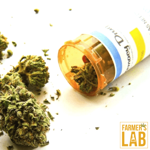 Cannabis Seeds Shipped Directly to Your Door in The Dalles, OR. Farmers Lab Seeds is your #1 supplier to growing Cannabis in The Dalles, Oregon.